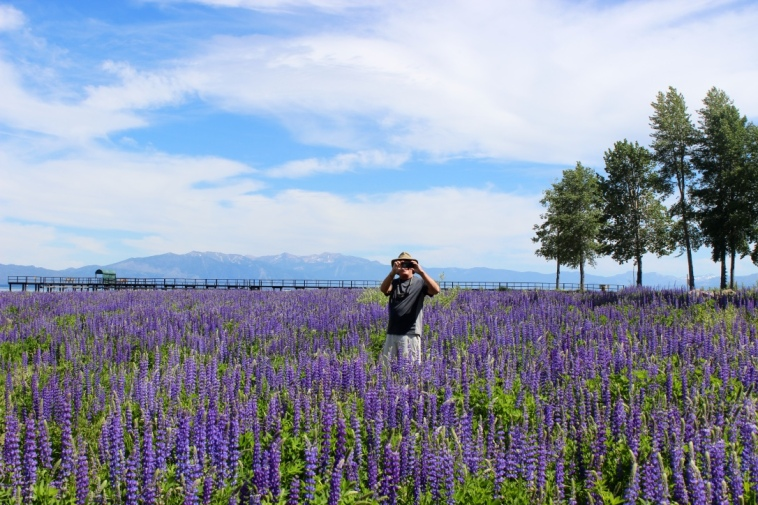 Lake Tahoe, CA. Joe in the Lupine Meadow.