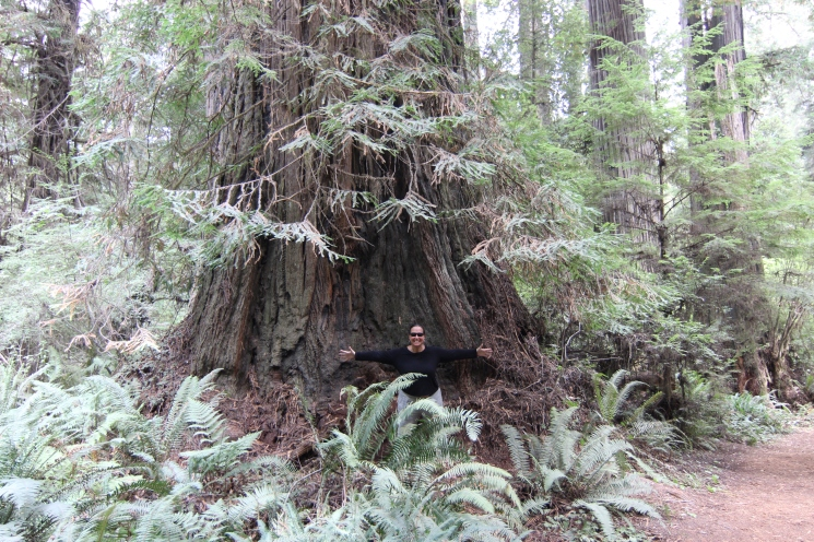 I was surprised to learn that the Redwood National and Sate Park is a temperate rainforest